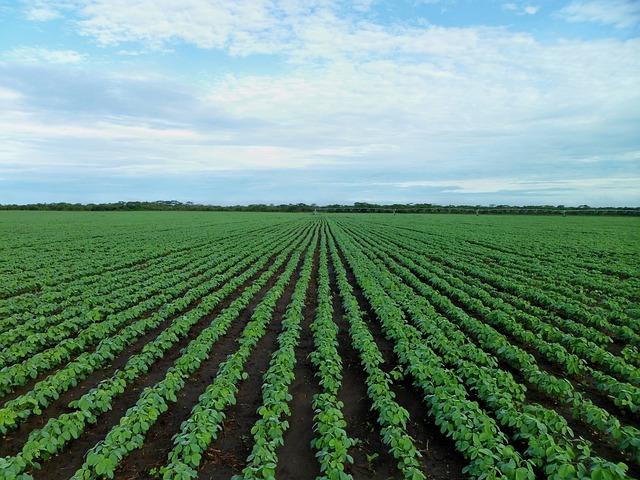 soybean-field-1610754_640