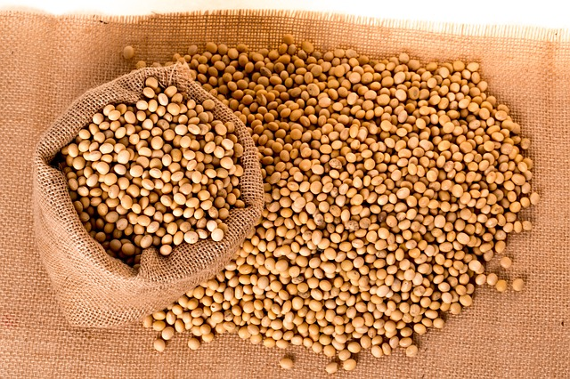 soybeans-2039638_640