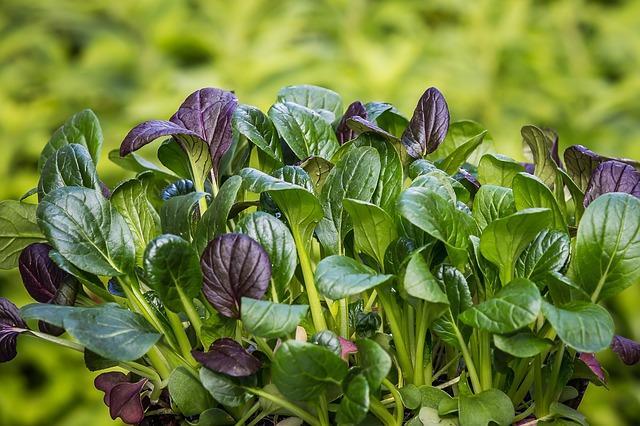 spinach-2310134_640
