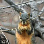 squirrel-241521_960_720