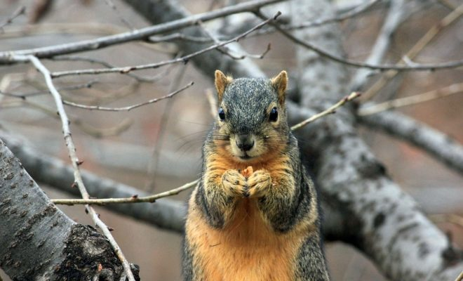squirrel-241521_960_720