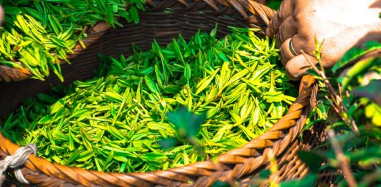 tea-1309015_960_720