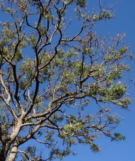 tree-277970_640