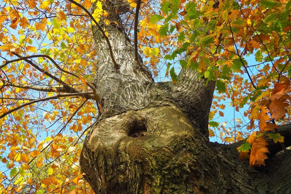 tree-2909245_960_720