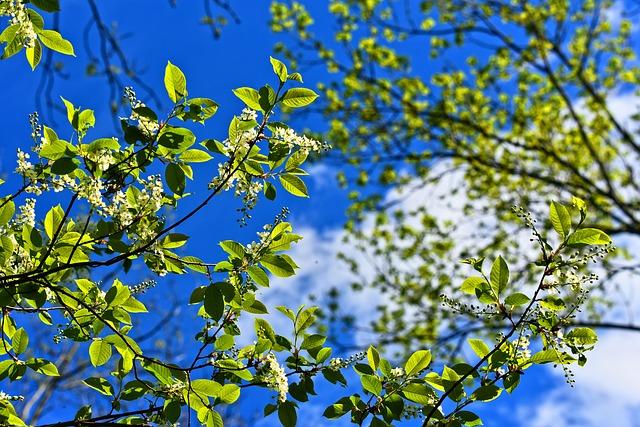 tree-3356034_640
