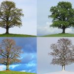 tree-776932_960_720