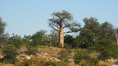 trees-1504652_640