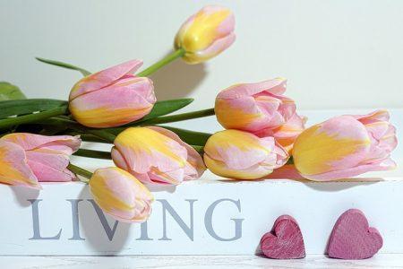 tulips-3142622_640