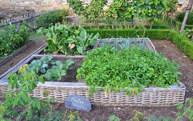 vegetable-garden-890625_640