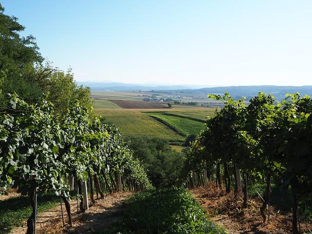 vineyard-2698412_640