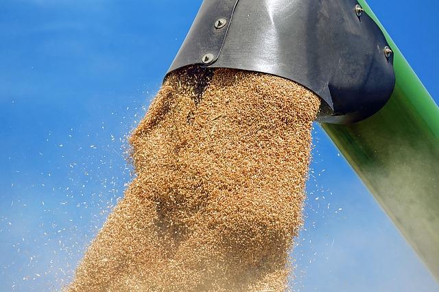 wheat-1508654_640