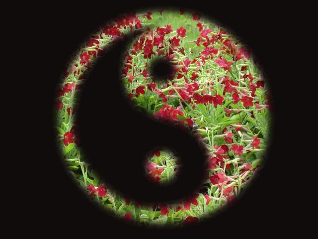 yin-yang-1712063_640