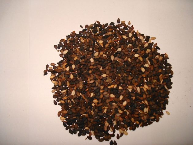 1280px-Sesame_seed_black