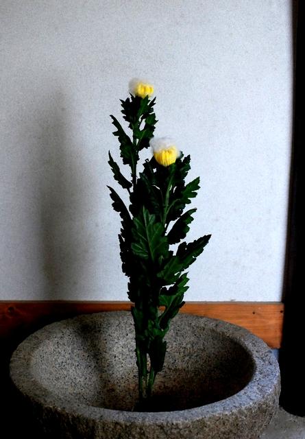 3-3yanagihara