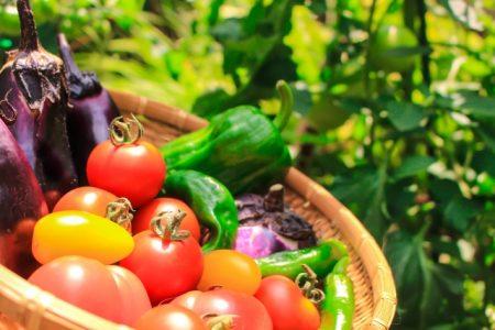 野菜_145318f66442c852b9ffa53978e2ea3d_s