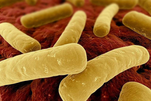 クロストリジウム菌