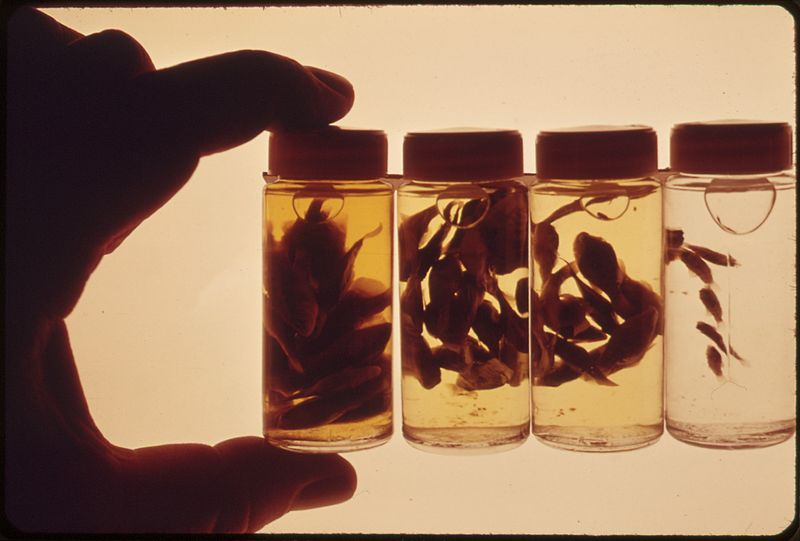 800px national water quality laboratory, 30 day growth of jordanella. the bottles, left to right, contain, 1 the control...   nara   551591