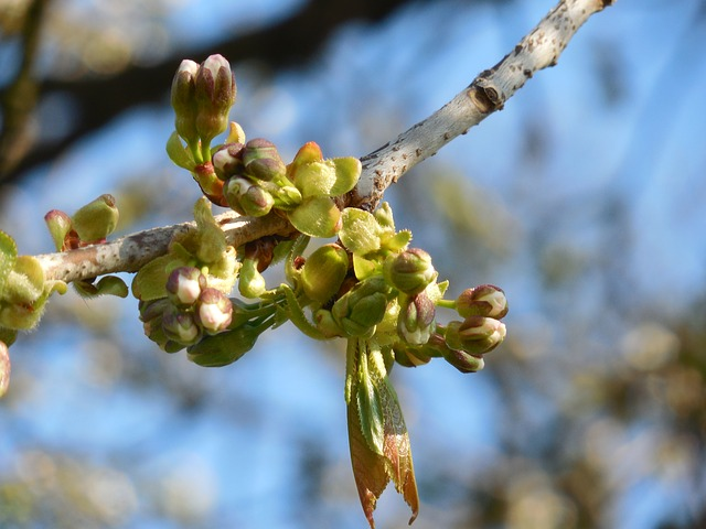 木の芽どき
