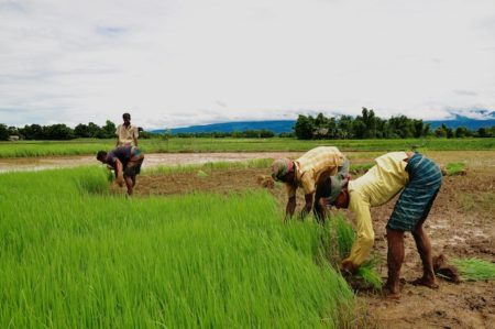 agriculture_of_bangladesh_11