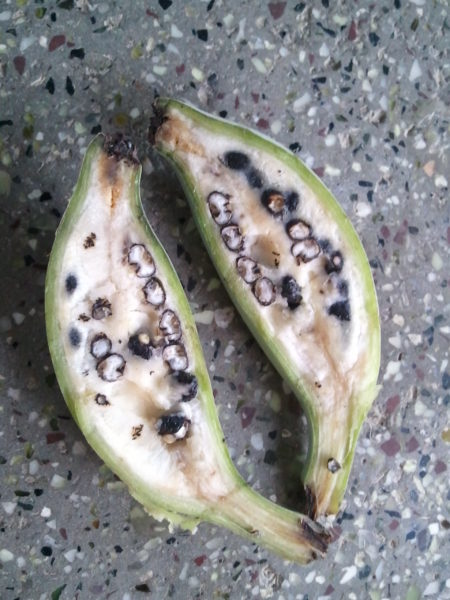 Banana_with_Seeds