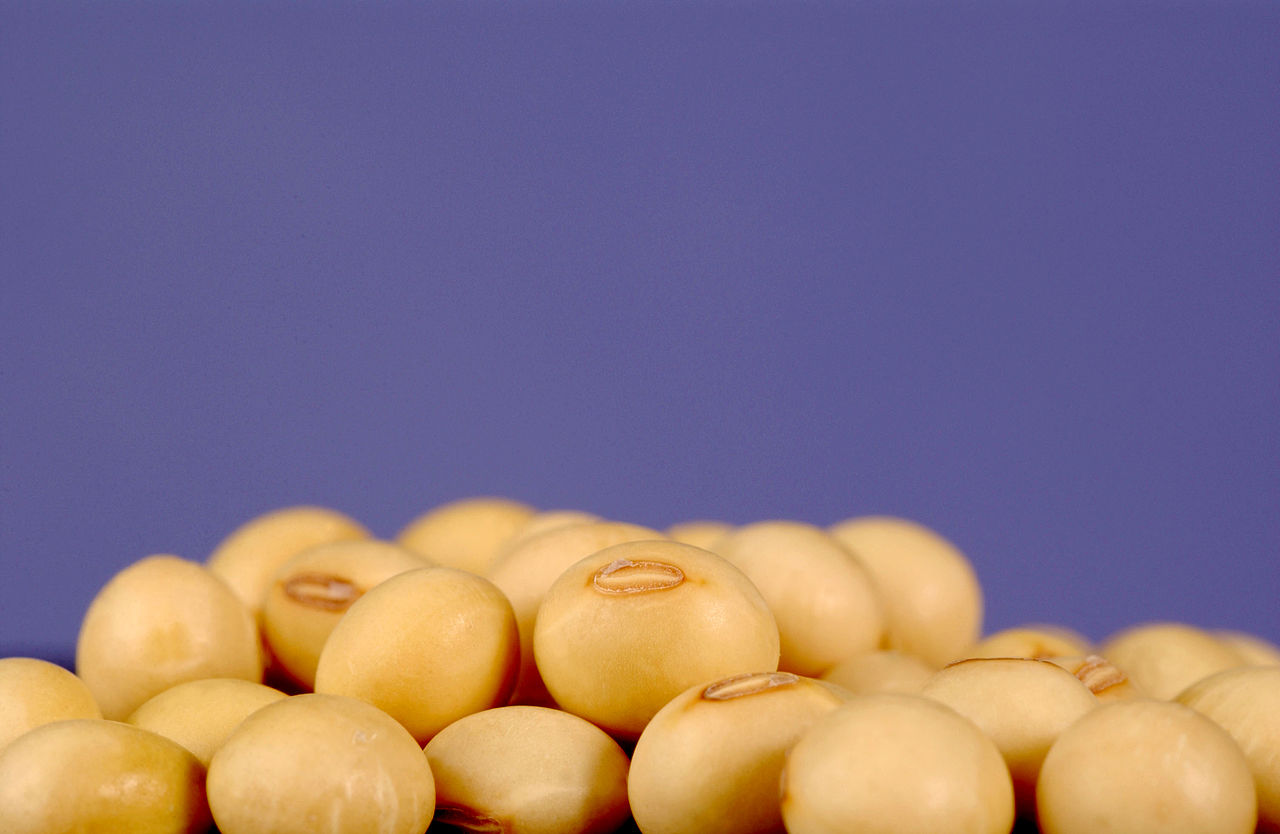 csiro scienceimage 3272 soybeans