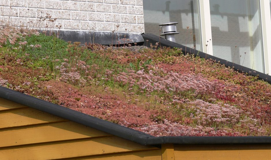 EVA-_Lanxmeer_Green_roof_2009