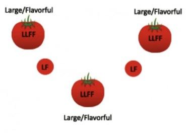 固定種の遺伝形式