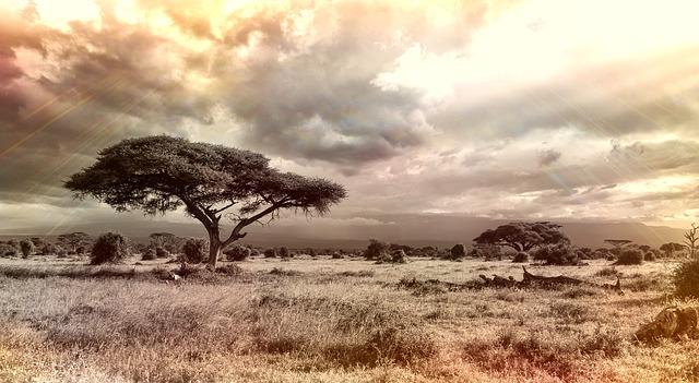 africa-944465_640