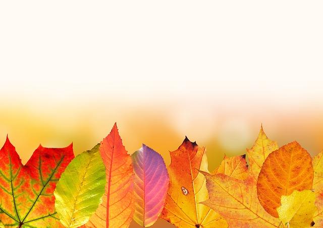 autumn-1649440_640
