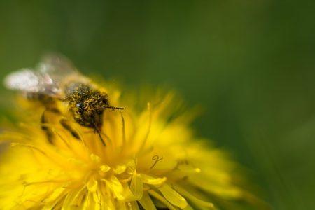 花粉だらけ はじめ