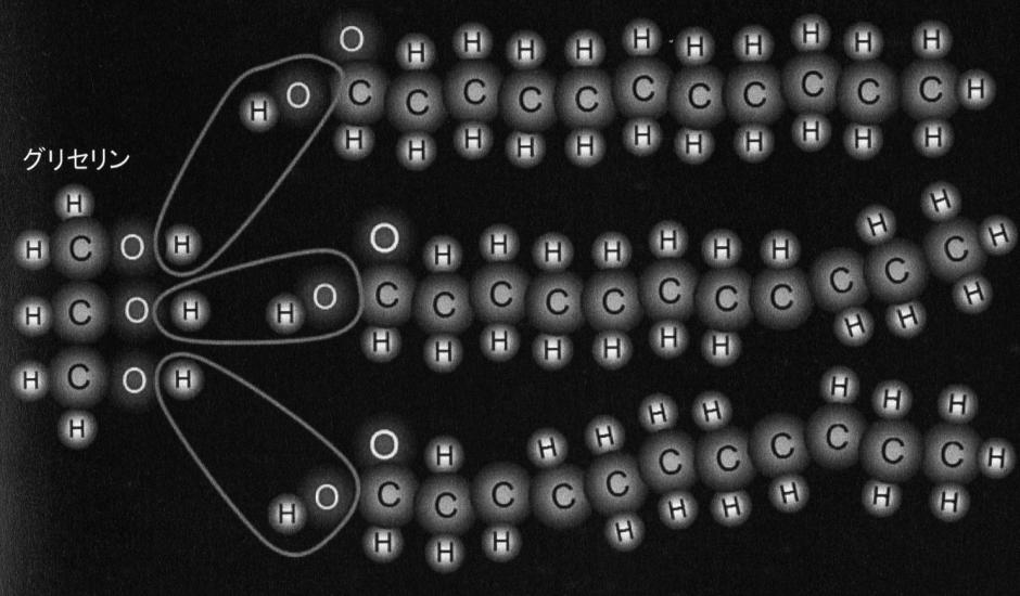 脂肪酸の図