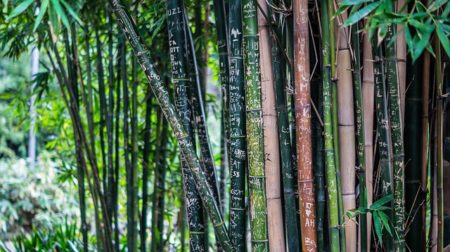 bamboo-142635_640
