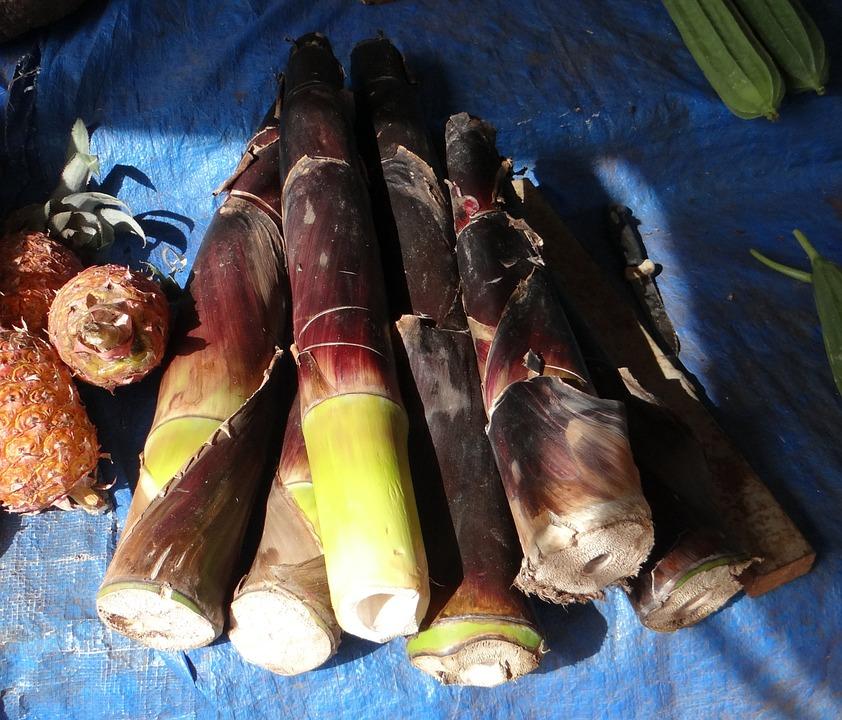 bamboo-shoots-385314_960_720