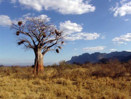 baobab-1029082_640