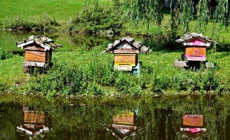 beehive-3660979_640