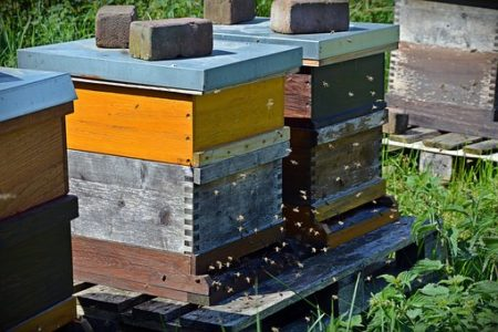 bees-1578726__340