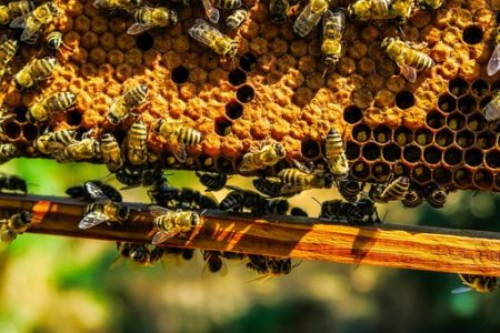bees-1818531__340