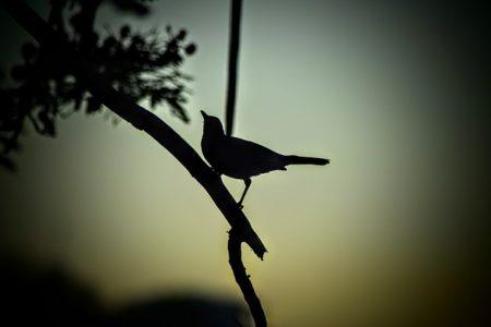 bird-1224912_640