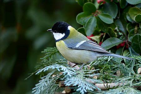 bird-2047085_640