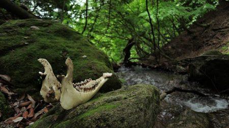 bone-1696609_640