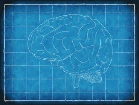 brain-1845941_640