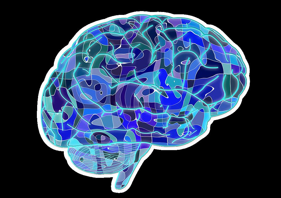brain 951874 960 720