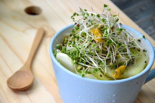 broccoli sprouts 1977721  480 2