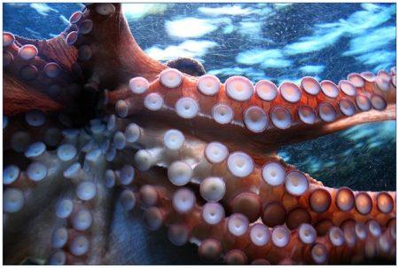 たこ_octopus-250101_640 (1)