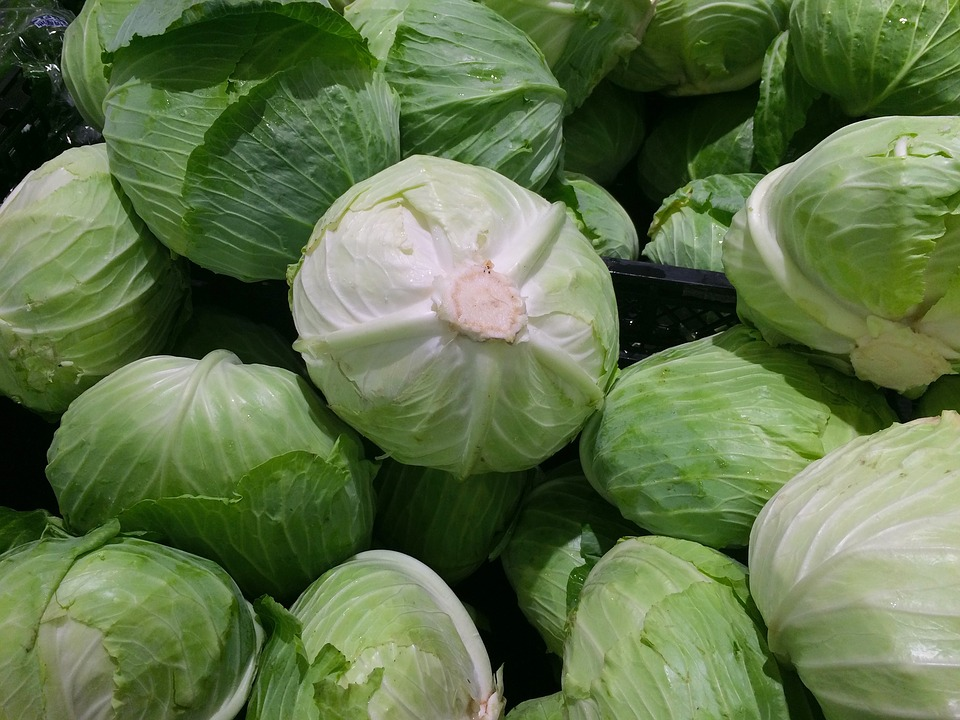 cabbage-1666765_960_720