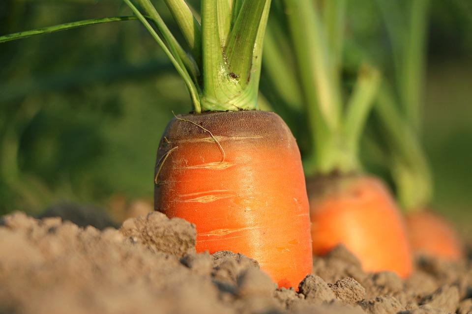 carrot 1565597 960 720