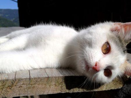 cat-2640444_960_720
