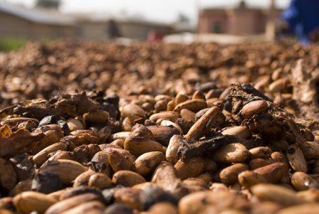cocoa-2427493_640