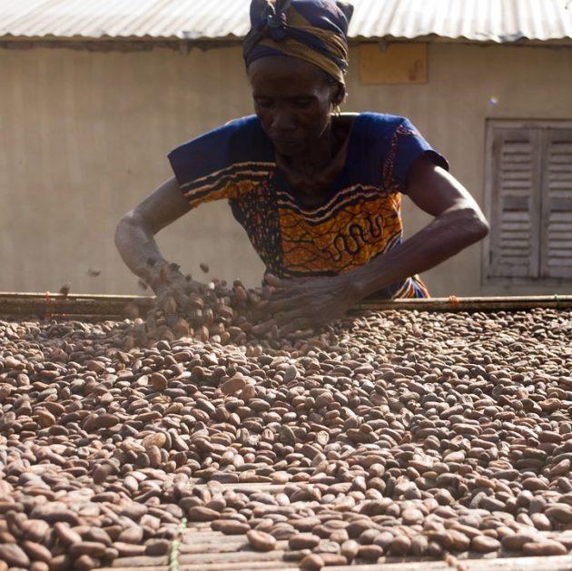 cocoa-2430115_960_720