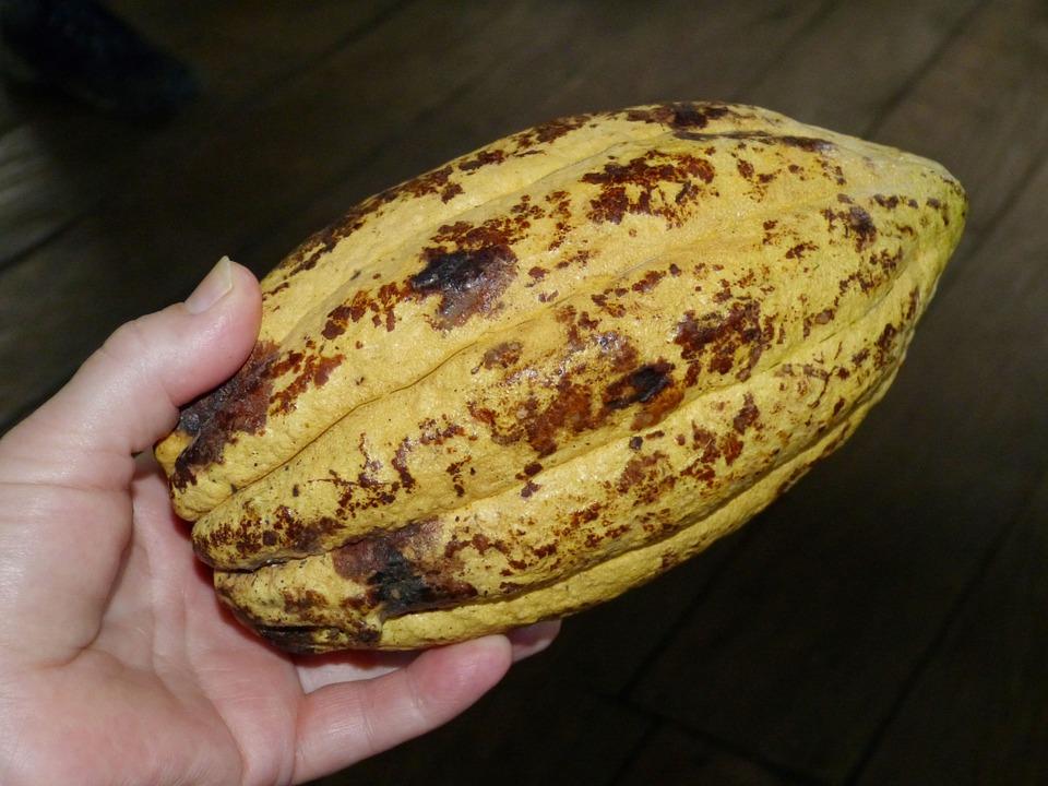 cocoa bean 280110 960 720